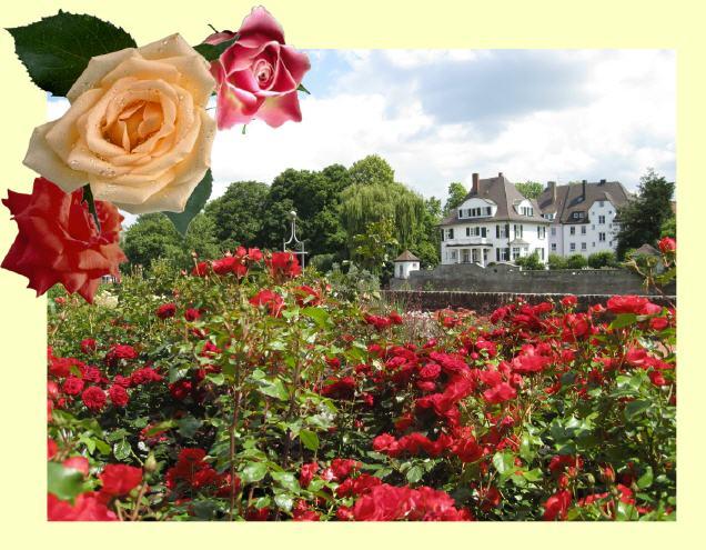 Rosengarten In Ulm